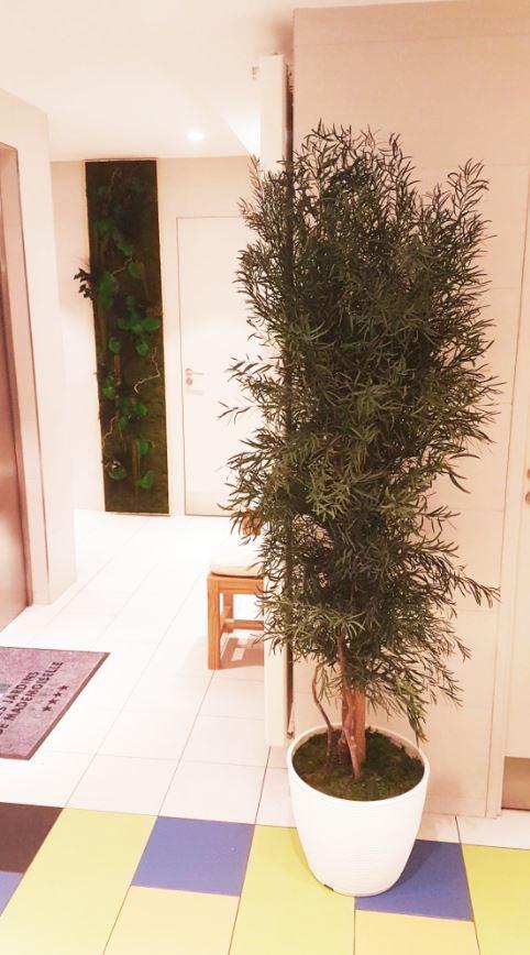 Plantes (JARDINS MADEMOISELLE)