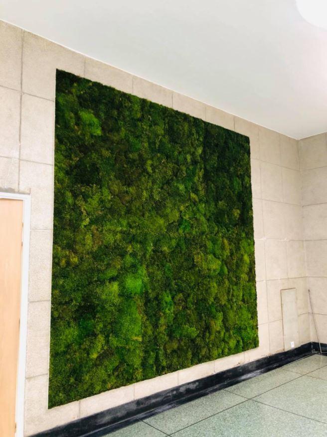 Mur végétal mousse plate (AFAEDAM)