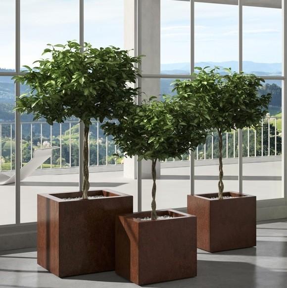 pots indoor outdoor vegetal indoor mur v g tal stabilis. Black Bedroom Furniture Sets. Home Design Ideas