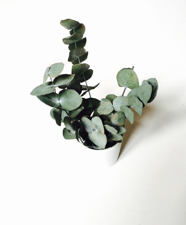 composition stabilis e eucalyptus cinerea vert vegetal indoor mur v g tal stabilis. Black Bedroom Furniture Sets. Home Design Ideas