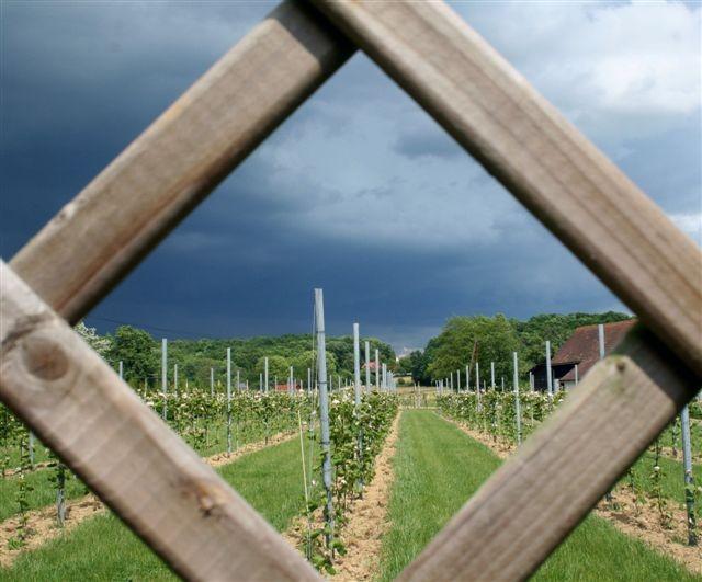 Von Weingärten umgeben