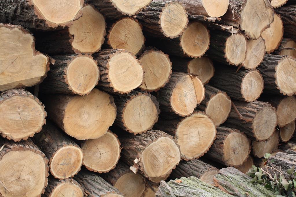 Perché in legno di robinia? - Hot Tub, SPA, tinozze in legno ...