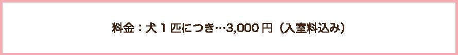 しつけ教室の料金は、犬1匹につき3000円ですの文字