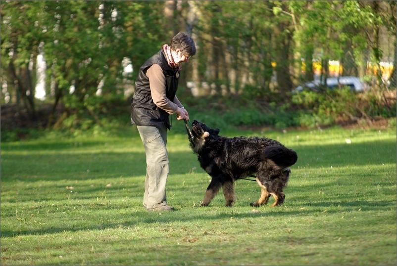 Spiel mit der Hundeführerin