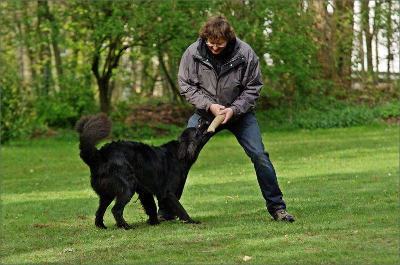 Spielen mit dem Hundeführer