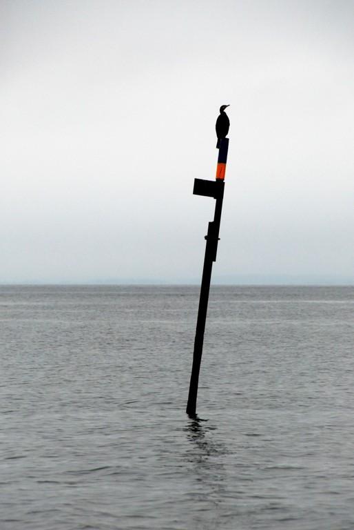Tyypillinen norjalainen kummeli ja tuttu eläin