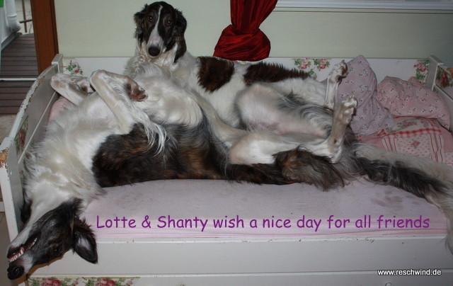 Lotte ( Alesja vom Euskirchenhof ) & Shanti (Shanti Shannon Bielie Noci) morgens um halb neun...