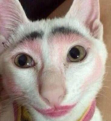 Schminktipp für eine Katze