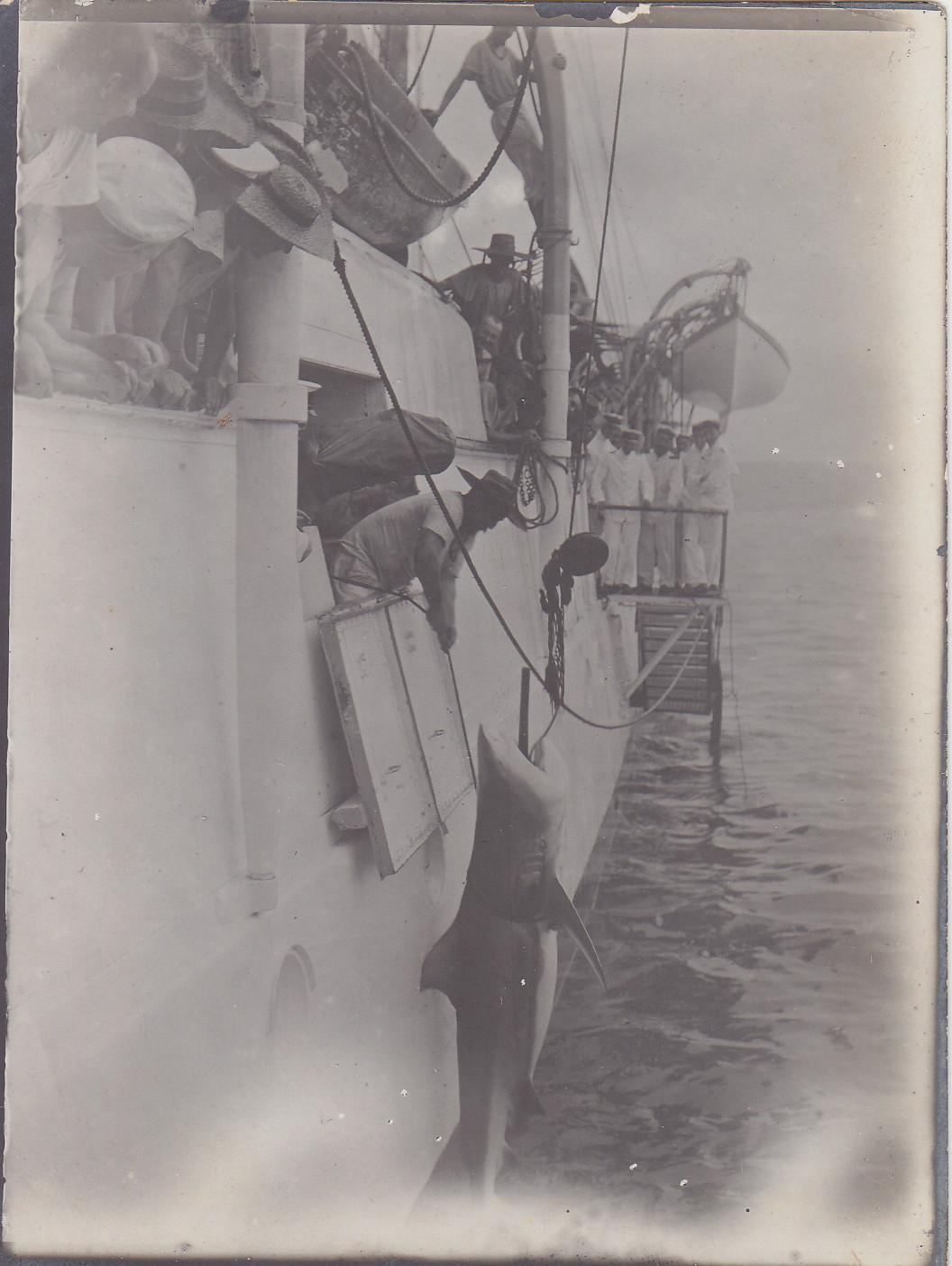 Gefangener Haifisch im Hafen von Majunga - Madagaskar 1912