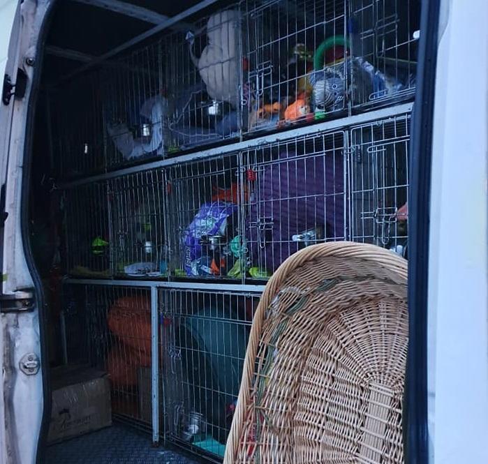 Spenden raus - Hunde rein :)