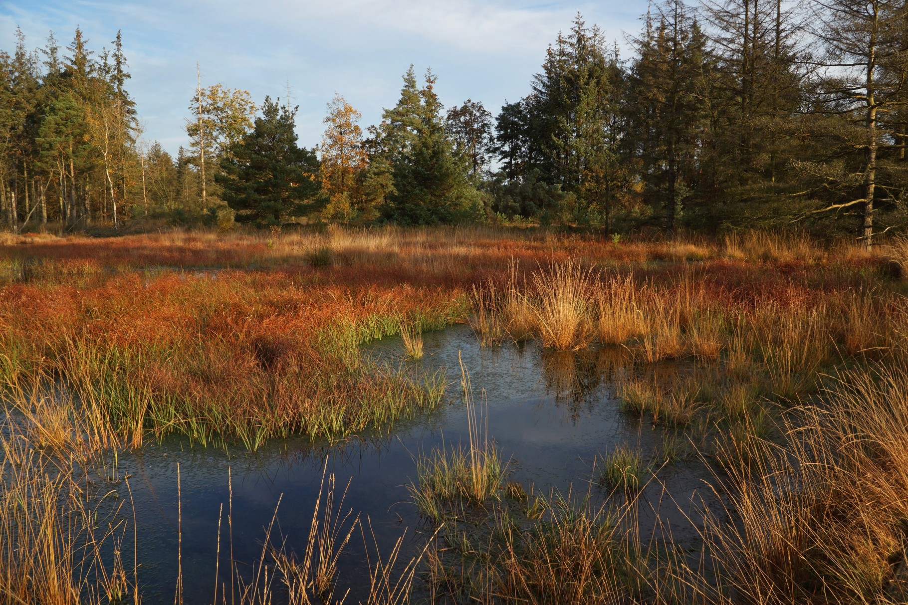 Moor - Bordelumer Heide