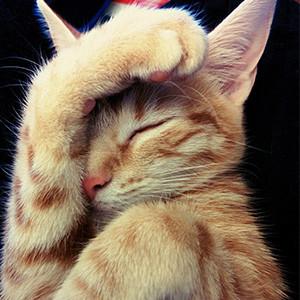 猫ちゃんは環境の変化に敏感です