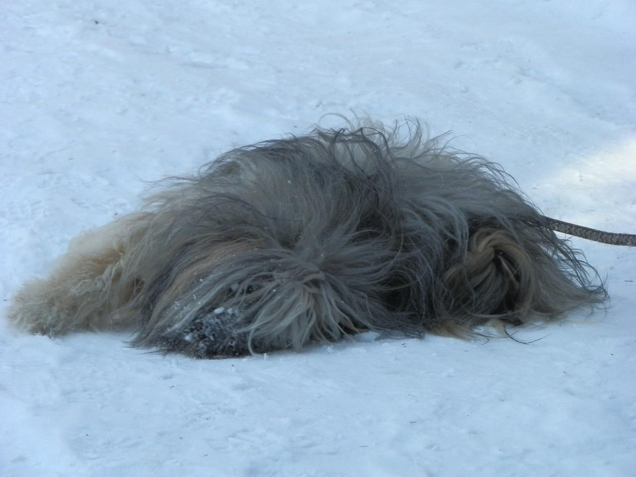 Namchu fand den Schnee...