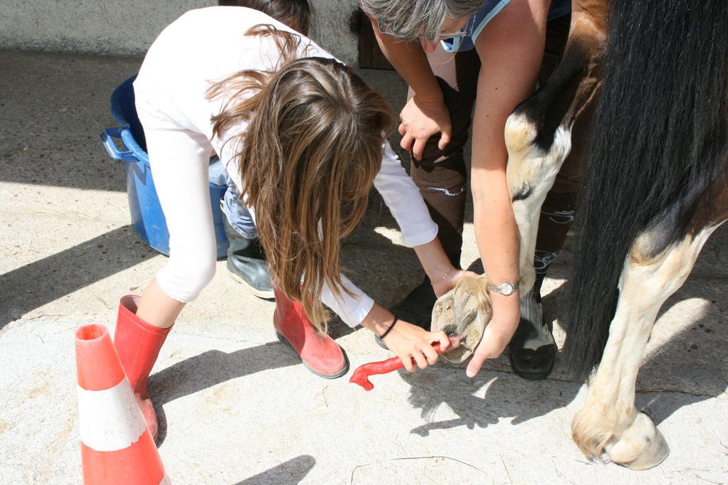Des pieds propres pour mon cheval...