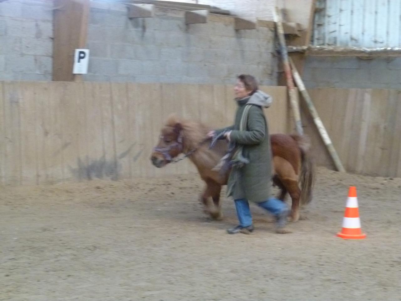 Thérapie senior : avec mon poney, j'oublie tout