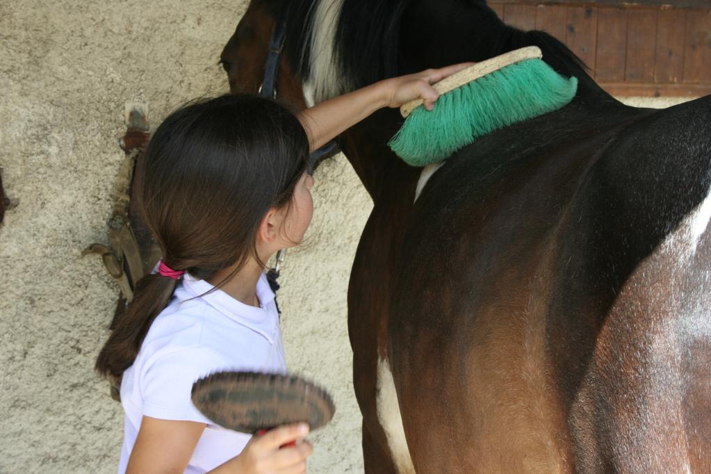 Je m'occupe de mon cheval