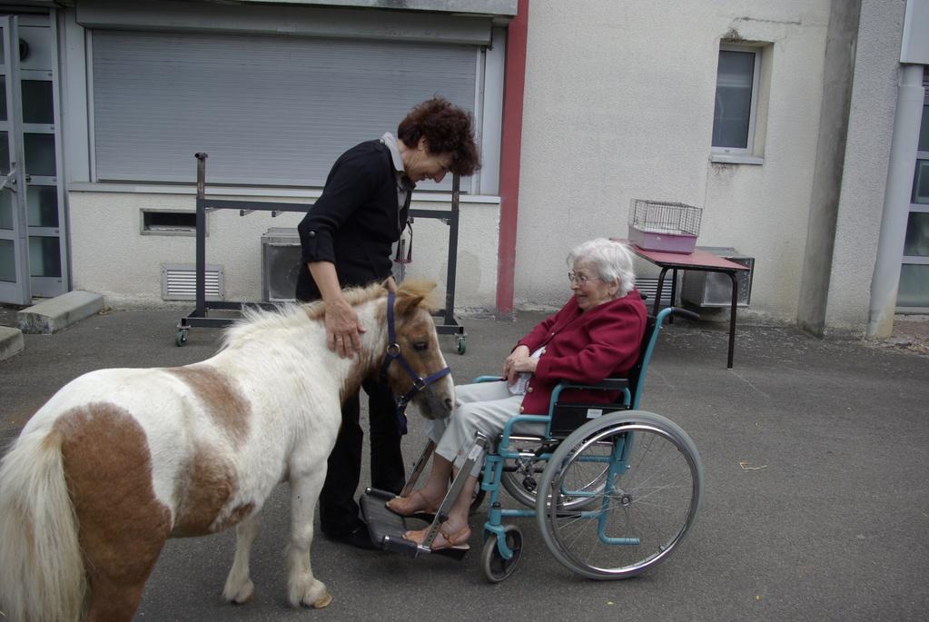 Thérapie senior : ce poney est venu jusqu'à moi..
