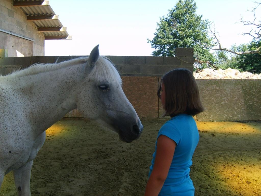 Un moment exceptionnel avec le cheval