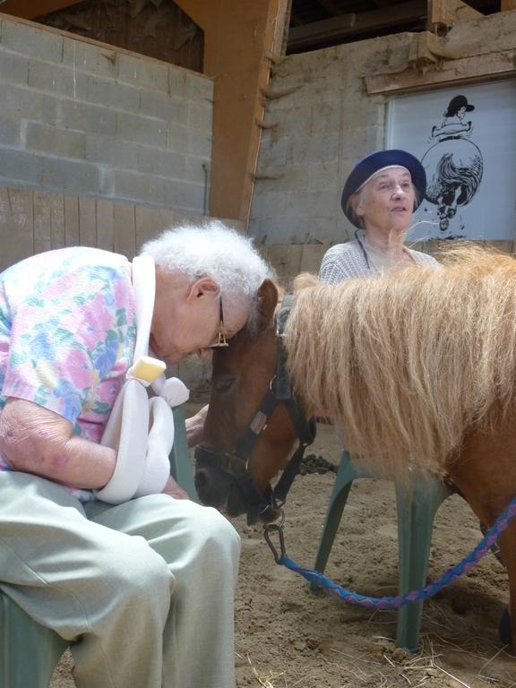 Thérapie senior : ah, les câlins avec les poneys!
