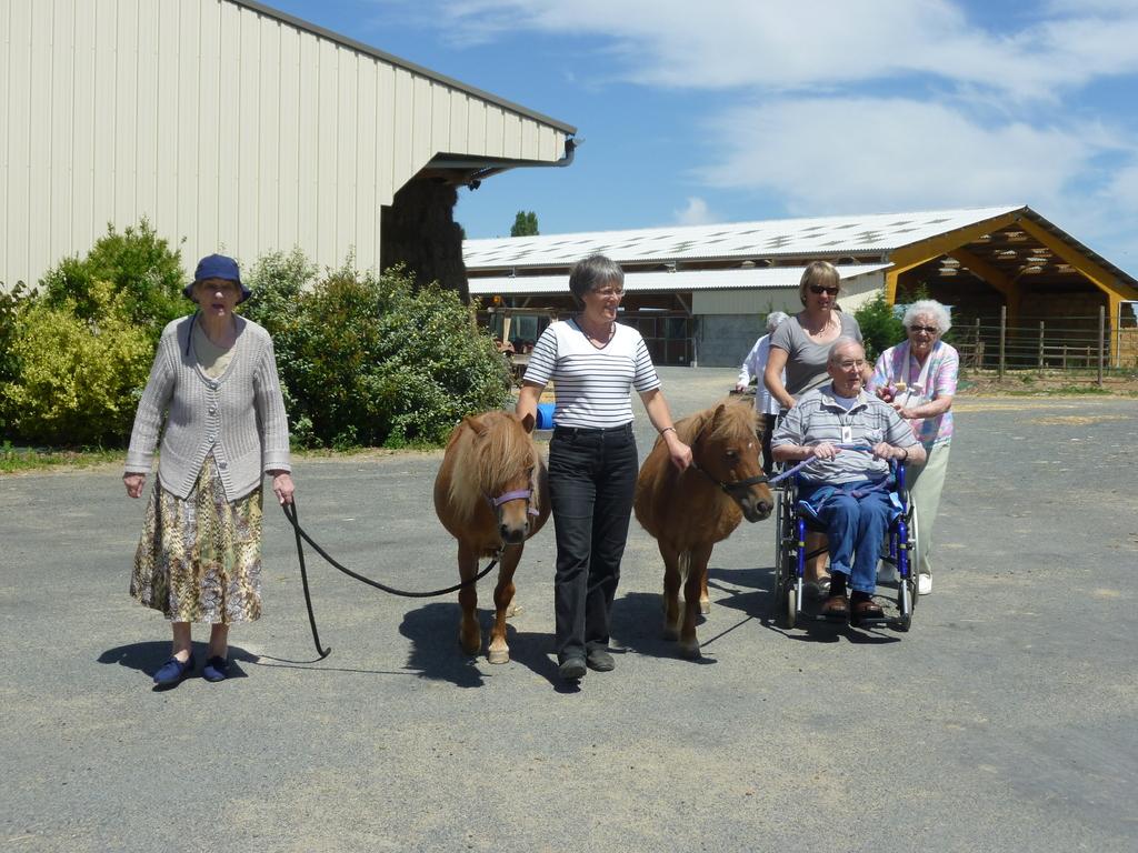 Thérapie senior : nous promenons nos poneys