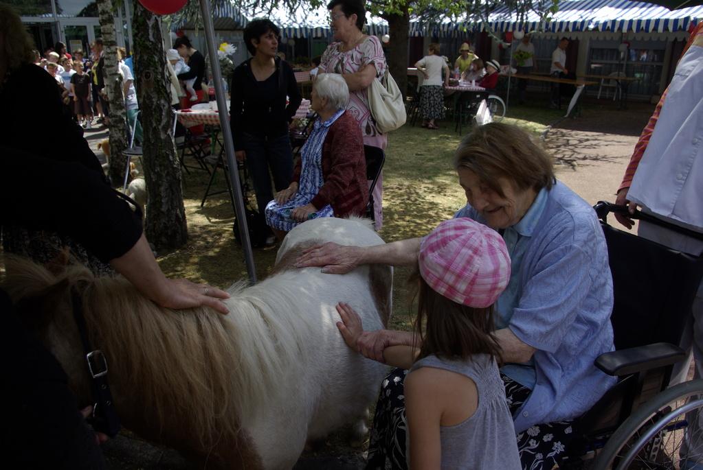 Thérapie senior : complicité autour du poney