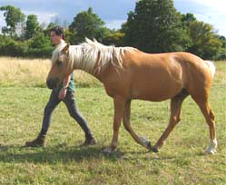 Stage de développement personnel avec le cheval : s'affirmer et coopérer.