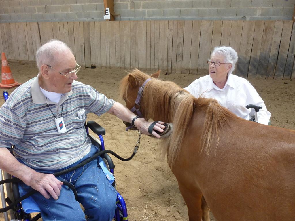Thérapie senior : il va être beau, notre poney!