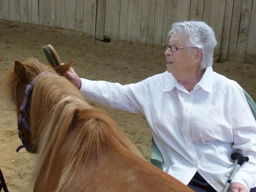 Thérapie senior : laisse-toi coiffer, mon poney!