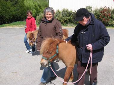 Thérapie senior : je marche avec mon poney
