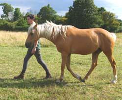 Il m'a été donné de faire une rencontre avec le cheval telle que je ne l'avais jamais vécue !