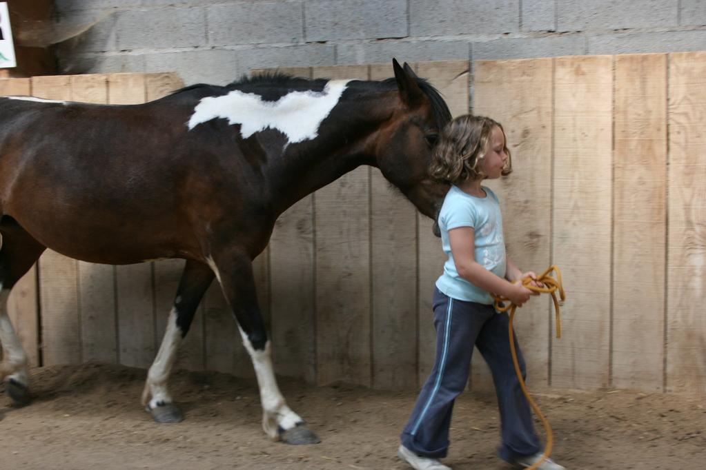 Le cheval en liberté me suit...