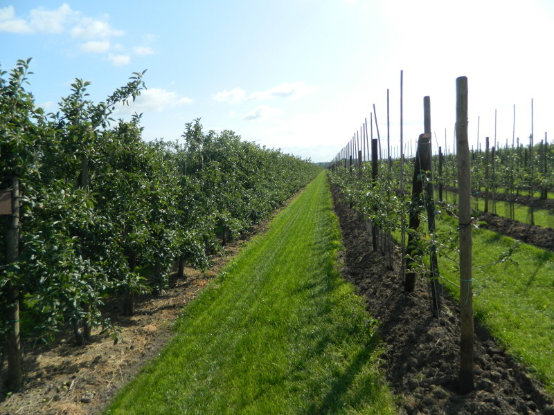 Apfelanlage ( links alt - rechts neu )