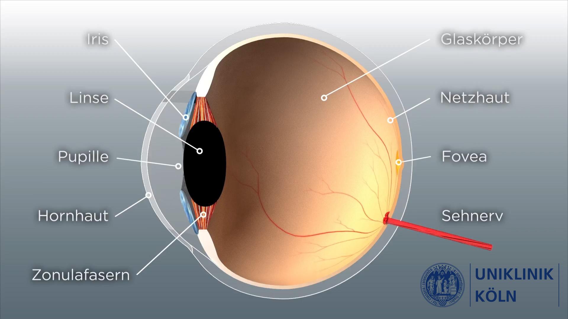 3D-Animation_Augenmedizin