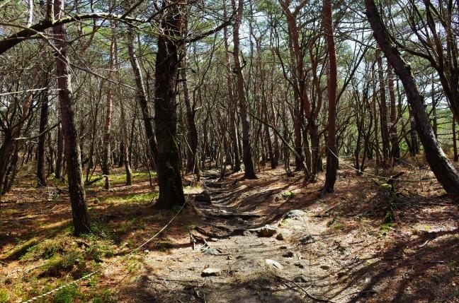 今週末の山歩きの予定は、蓼科、美ヶ原、霧ヶ峰か