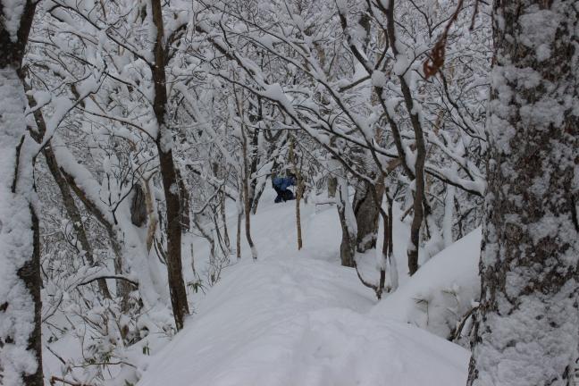 野塚岳1147付近
