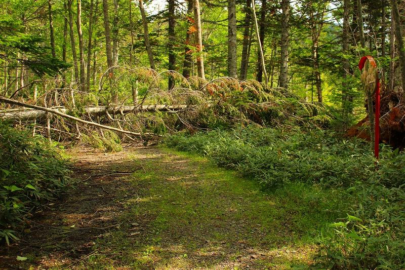 ウペペサンケ山林道被災状況倒木箇所