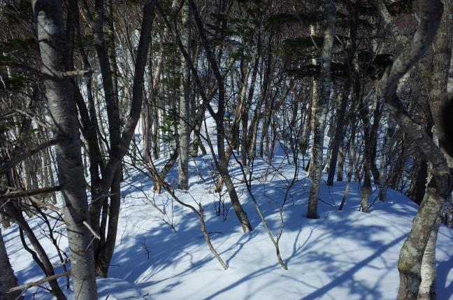 ちょっと木がうっとうしいカナ~って箇所