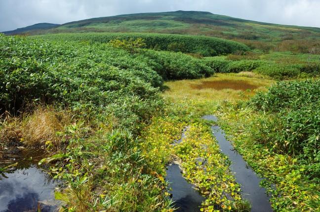 パンメクンナイ湿原