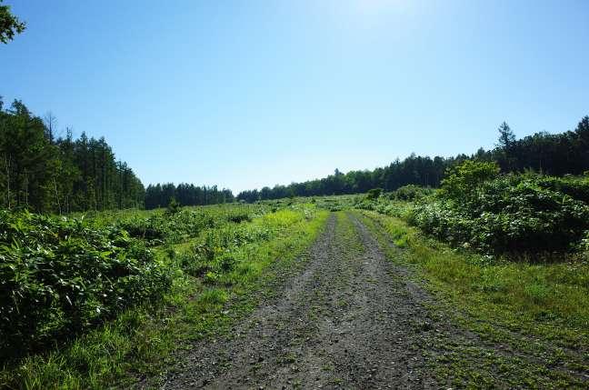 斜里岳三井コースへの林道