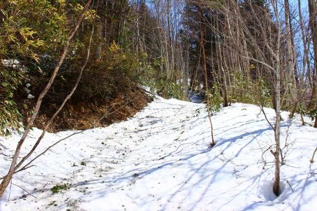 群別岳への作業道跡