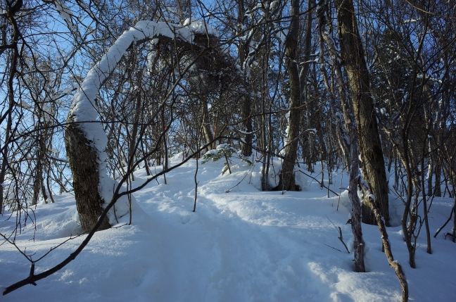 阿部山への登山道