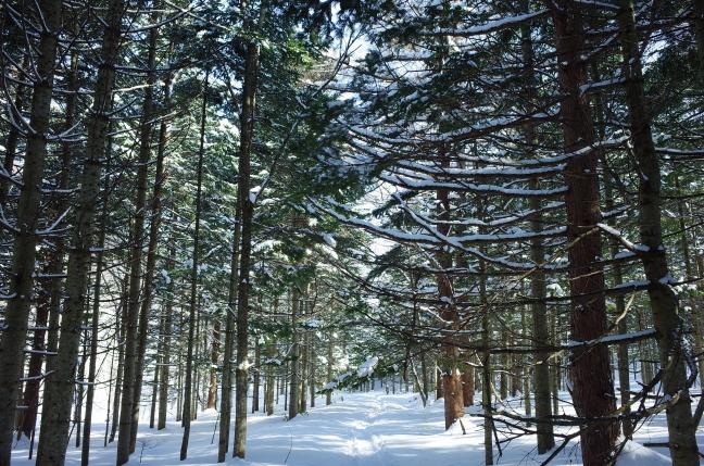 宮城の沢林道
