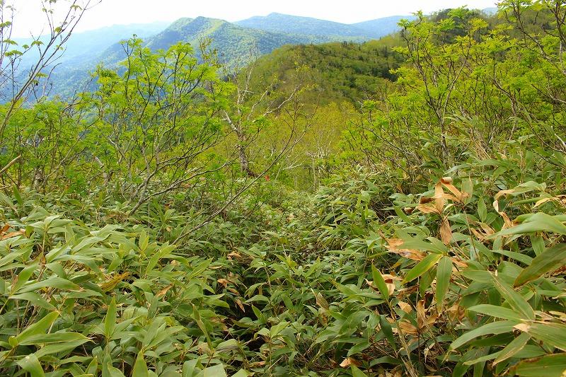 ウペペサンケ山登山道