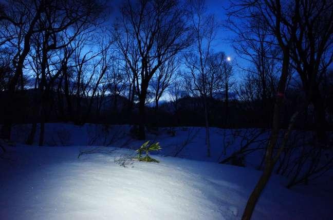 明け方の森の中