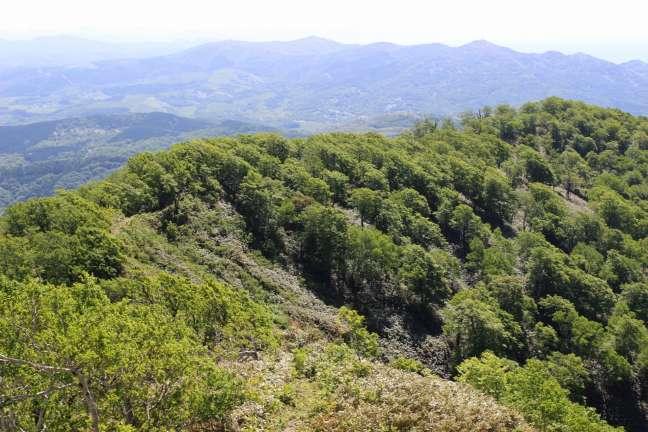 黒松内岳登山道から見た風景