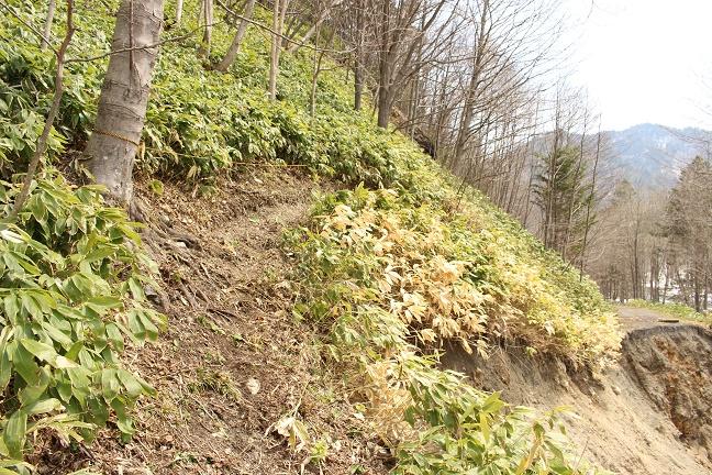 シートカチ支線林道被災地点