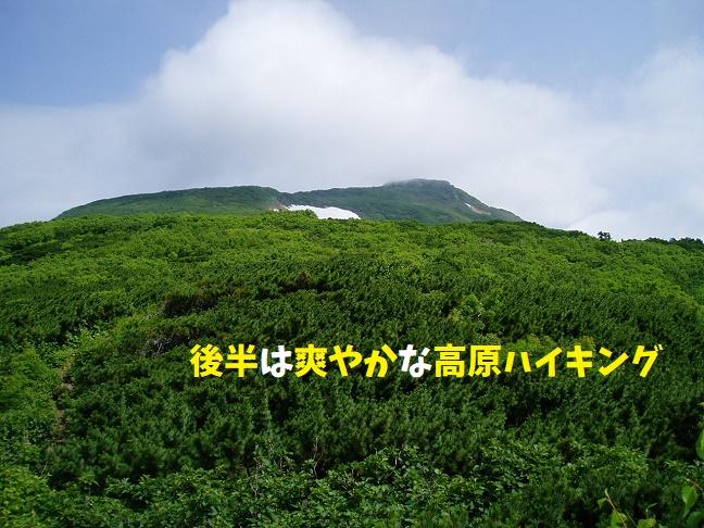 高原ハイキング