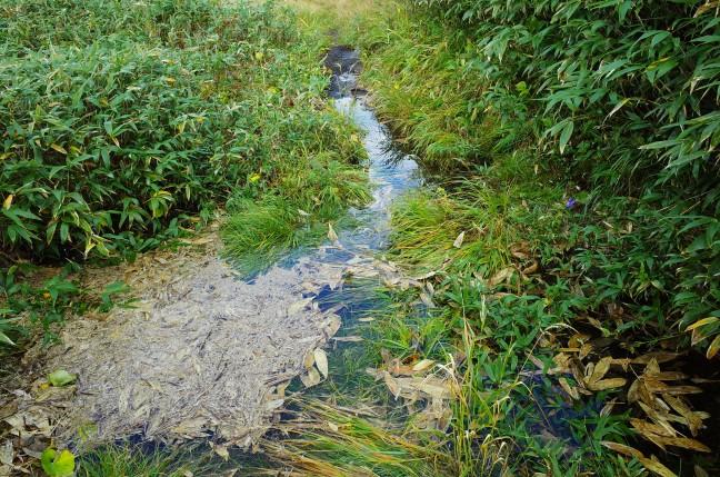 パンメクンナイ湿原の登山道
