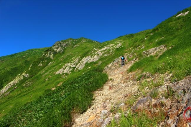 越後駒ヶ岳の夏山登山|枝折峠から小倉山を越えて緑と残雪の頂へ(8月上旬)