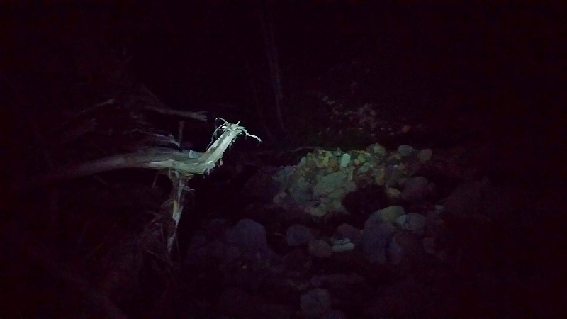 ウペペサンケ山林道深夜